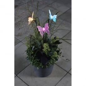 Assisi LED Cluster Of 3 Solar Outdoor Butterfly Ground Spike Light With Colour Changing LED's